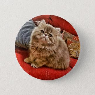 Badge Rond 5 Cm Bouton persan adorable de chaton