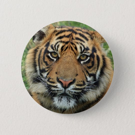 Badge Rond 5 Cm Tigre Standard : 5,7 cm Bouton rond