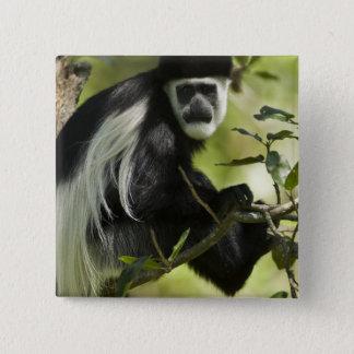 Badge Singe de Colobus noir et blanc, Colobus 2