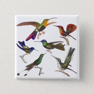 Badge Six colibris différents - leçon de Rene Primevere