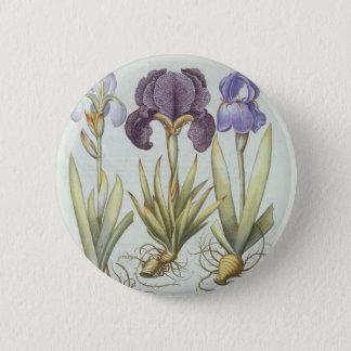 Badge Trois variétés d'iris imberbes de Rhizomatous