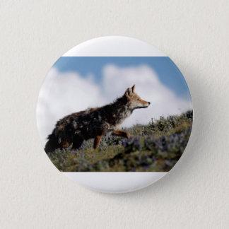 Badge Un coyote marche en parc national de Yellowstone,