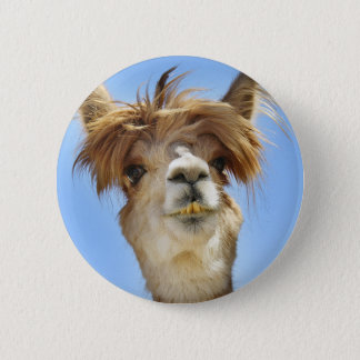 Badges Alpaga fol de cheveux