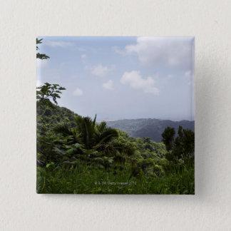 Badges Arbres dans une forêt tropicale, forêt tropicale
