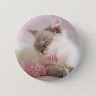 Badges bouton de chaton de ragdoll