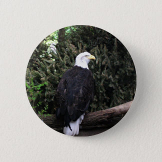Badges Bouton d'Eagle chauve