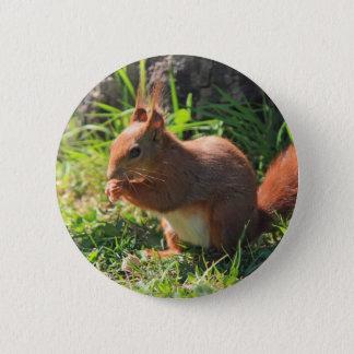 Badges Bouton rouge de photo d'écureuil beau, goupille