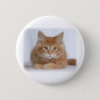 Badges Chaton 9Y226D-373a de ragondin du Maine