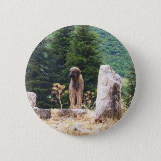 Badges Chien de berger anatolien - Ephesus, Turquie