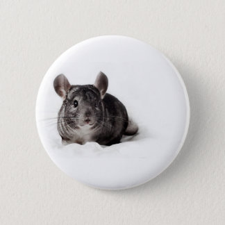 Badges Chinchilla gris mignon dans la couverture