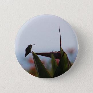 Badges Colibri sur le bouton de fleur d'Oiseau-de-Paradis