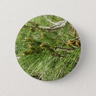 Badges Cônes non mûrs de mâle ou de pollen de pin