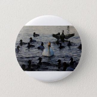Badges Cygne dans un étang