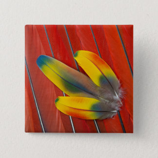 Badges D'écarlate d'ara de plume toujours la vie