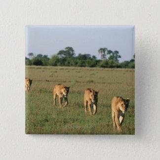 Badges Delta d'Okavango, Botswana 4