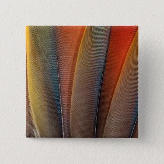 Badges Détail d'aile d'ara d'écarlate