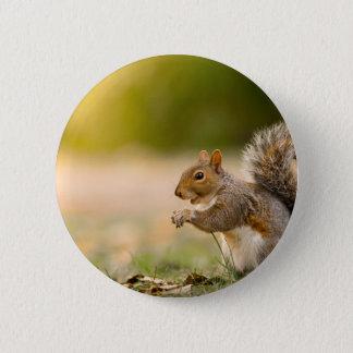 Badges Écureuil affamé