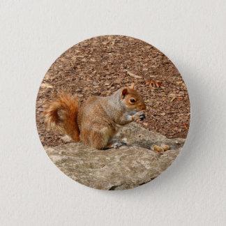 Badges Écureuil mignon mangeant des écrous