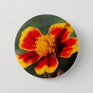 Badges fleur dans le jardin