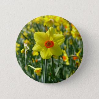 Badges Jonquilles jaune-orange 01.0.2