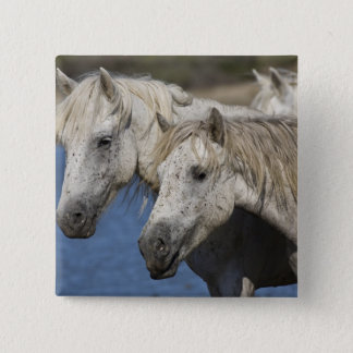 Badges La France, Camargue. Chevaux courus par