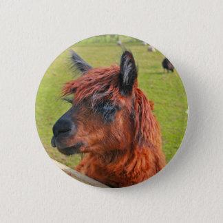 Badges Lama de gingembre