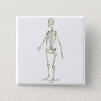 Badges Le système squelettique