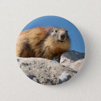 Badges Marmotte alpine sur la roche