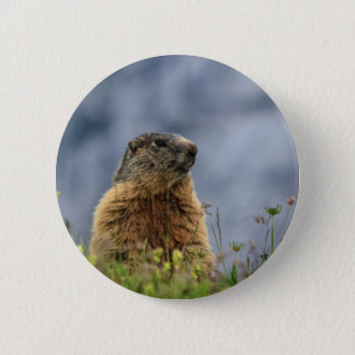Badges marmotte sur le pré alpin