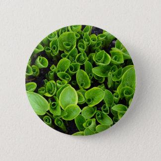 Badges Nouveaux plantes verts de hosta dans le jardin