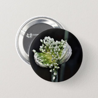 Badges Oignon fleurissant de ressort