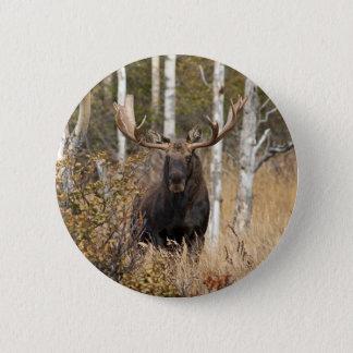 Badges Orignaux impressionnants de Taureau