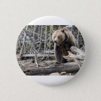 Badges Ours gris en parc national Etats-Unis de