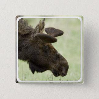 Badges Pin de carré de photo d'orignaux