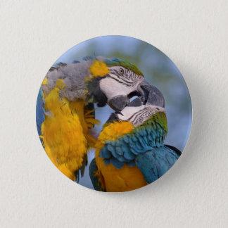 Badges Plan rapproché des aras ou du bleu-et-or mA de