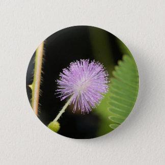 Badges Plante sensible (pudica de mimosa)