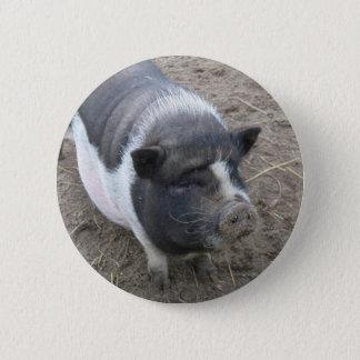 Badges Porc gonflé par pot