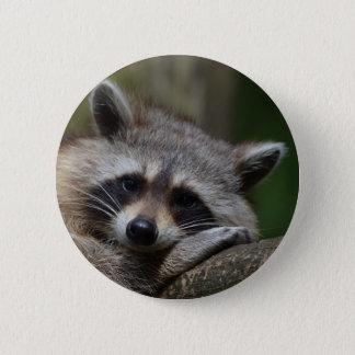 Badges Raton laveur
