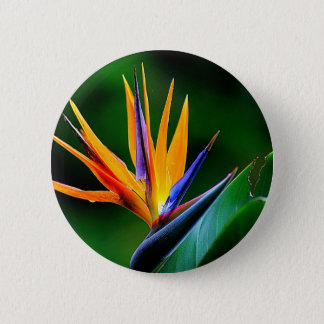 Badges Strelitzia. Oiseau de fleur de paradis