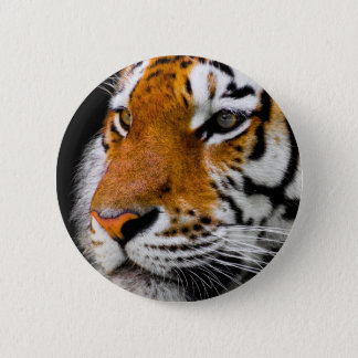 Badges Tigre