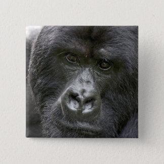 Badges Volcans NP, Rwanda, gorilles de montagne,