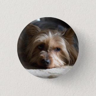 Badges Yorkie/bouton soyeux de terrier de yorky/Yorkshire