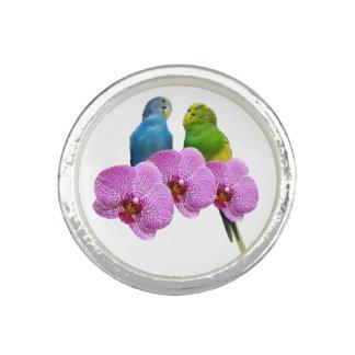 Bagues Perruche avec l'orchidée pourpre
