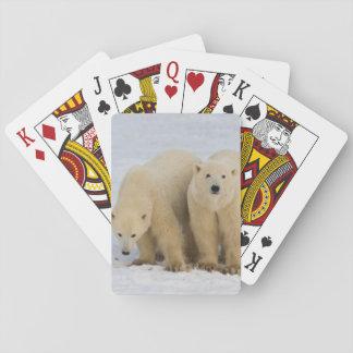 Baie du Canada, le Hudson. Mère d'ours blanc avec Cartes À Jouer
