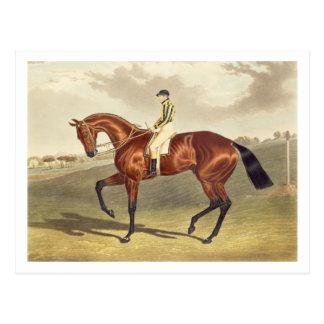 Baie Middleton, gagnant du Derby en 1836, ensuite Carte Postale