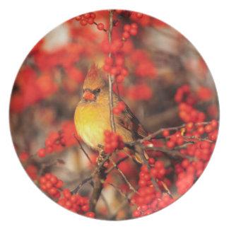 Baies femelles et rouges cardinales, IL Assiettes En Mélamine