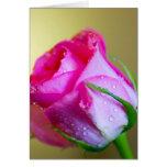 Baisers de baisse de pluie de nature sur le rose d cartes de vœux