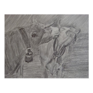 Baisers des vaches cartes postales