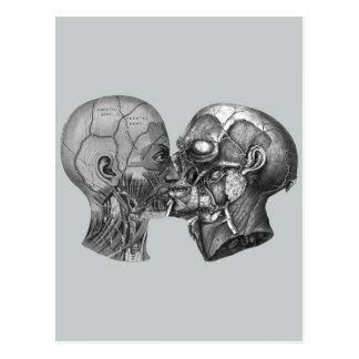 Baisers principaux anatomiques vintages carte postale