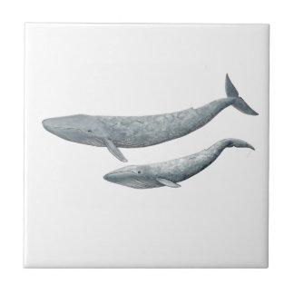 Baleine bleue petit carreau carré